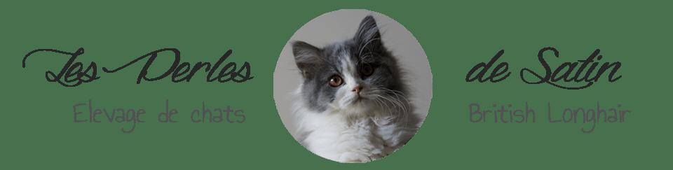 British Longhair des Perles de Satin -