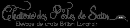 British Longhair des Perles de Satin